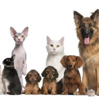 Welcome to the World of the Discount Pet Supply and the Smart Pet Owner!