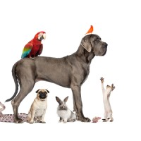 Free Dog Training Tips: Easy Steps to You Leading the Pack, part 3
