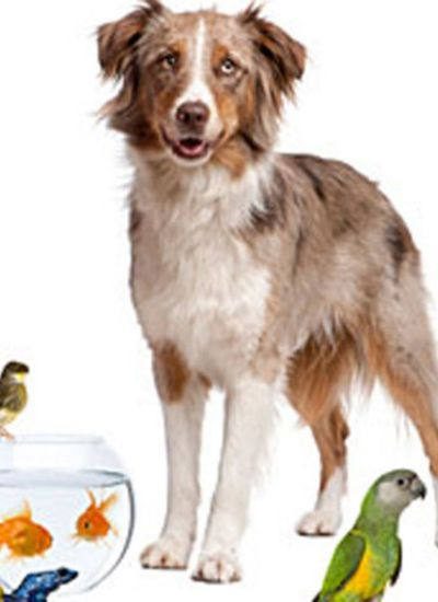 Minnows As Pets