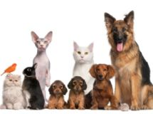 Evolutionizing Dog Training for the 21st Century