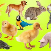Get best quality of pet supplies from Pet shop Delhi