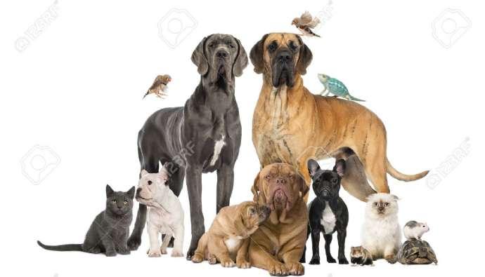 Dog Arthritis & Joint Health