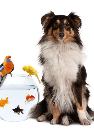 Getting a Puppy Or Dog - The Unbiased Pros and Cons to Dog Ownership