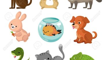 Pets & Animal: Aquarium Backgrounds Make Your Tank Come Alive