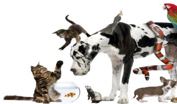 Pets & Animal: Home Remedies for a Cat's Itching Skin