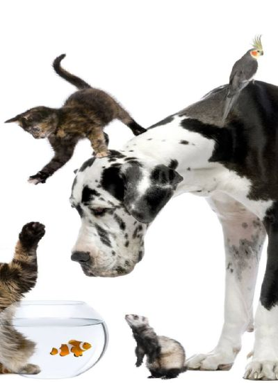 Cat Urinating Everywhere - Making Your Pets Litter Box More Inviting