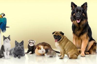 Dog Breeding - The Essentials