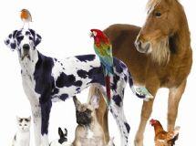 Puppy And Dog Training Secrets - Finally Revealed