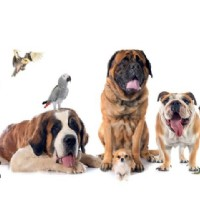 Features To Be Reflect About The Animal Home Care Manhattan KS