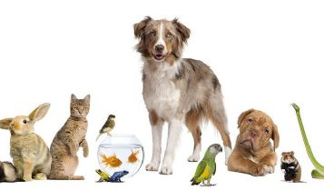 Pets & Animal: When it Comes to Canine Bladder Infections, Rely on Nature's Healing