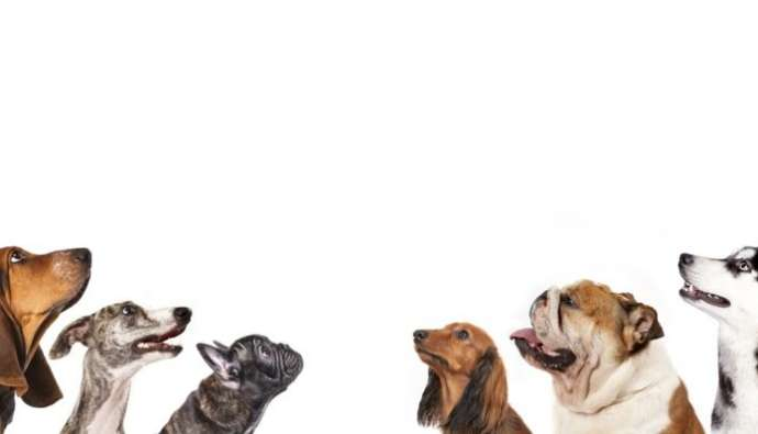 Deciding Which Dog Is Right For You
