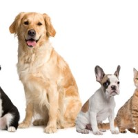 Finding the Right Stud for Dog Breeding