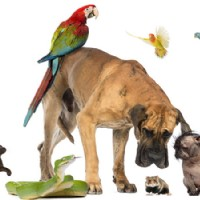 How to Teach your Dog to Stop Barking with a Dog Behaviour Training Programme
