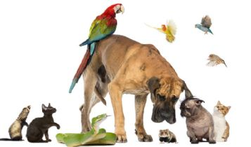 Pets & Animal: Selecting the Right Dog