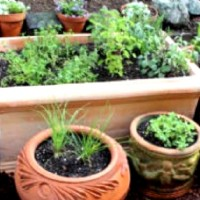 Organic Gardening - Mixing Your Own Potting Media