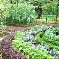 Growing Vegetables Organically - It's All About Planning