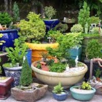 Lighting Your Garden Oasis