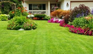 Home & Garden: Tips For a Beautiful Yard